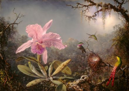 Heade, Martin Johnson: Cattleya Orchid and Three Hummingbirds. Fine Art Print/Poster (4180)